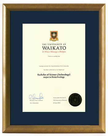 Waikato Degree Gold Frame 837