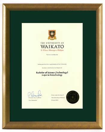 Waikato Degree Gold Frame 8447 CONSERVATION